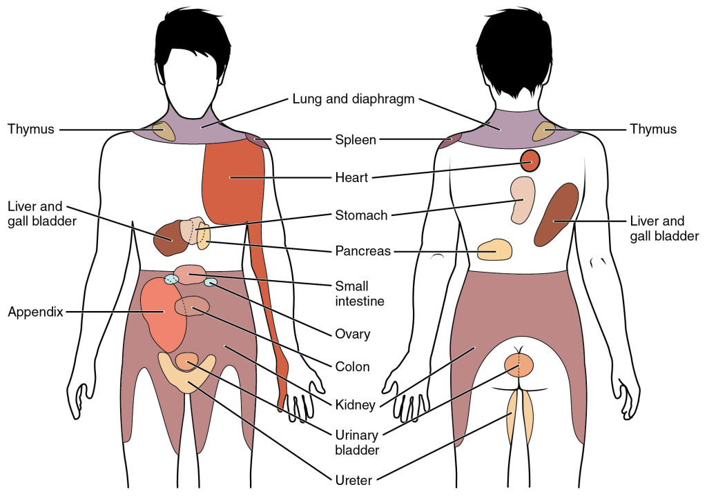 1506_Referred_Pain_Chart