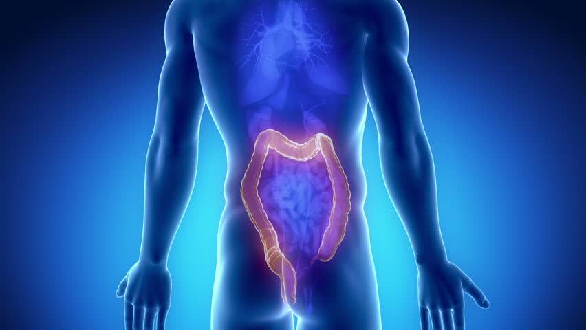 Jew Detector: Digestive Issues And Low Back Pain